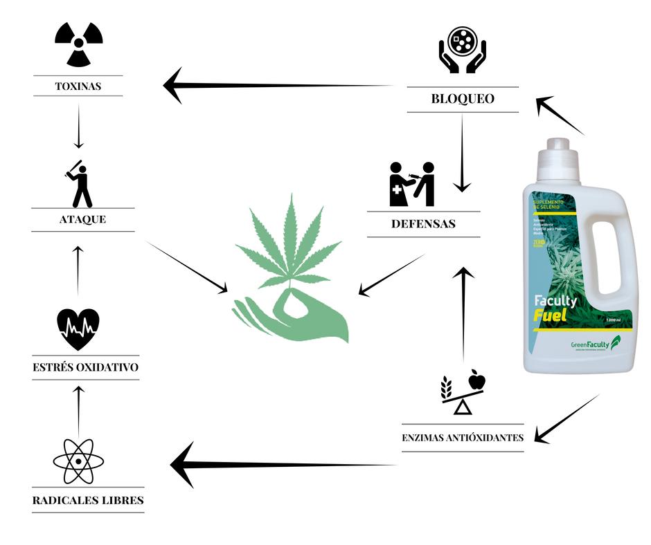 Esquema Fuel selenio para marihuana