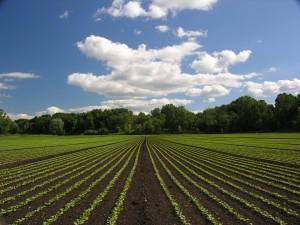 greenfaculty fertilizantes abonos nutrientes cannabis marihuana ecológicos