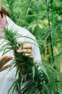 los mejores fertilizantes para marihuana cannabis