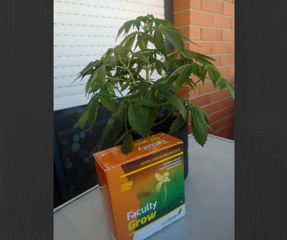 Marihuana-crecimiento-abono-fertilizante-greenfaculty-cannabis