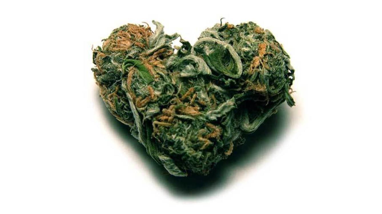 corazón marihuana cannabis greenfaculty fertilizantes abonos nutrientes