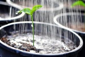 riego marihuana agua blanda, agua de ósmosis, greenfaculty, faculty calmax