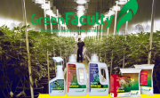5 empresas del cannabis para invertir marihuana medicinal greenfaculty