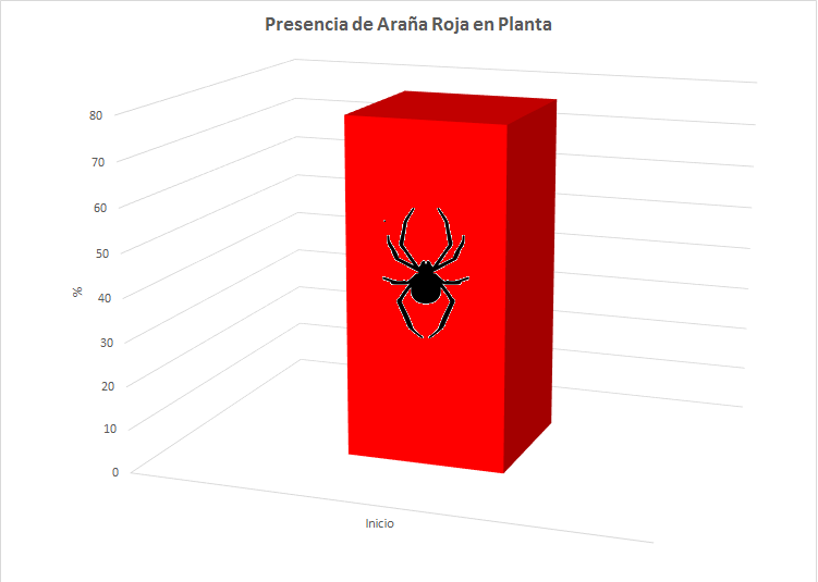 Grafico Araña Roja Inicio Faculty Killer Marihuana Cannabis