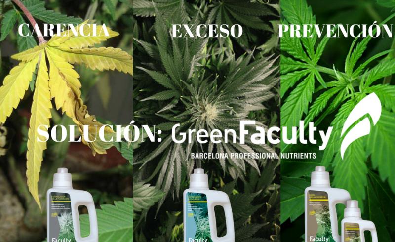 nitrógeno-carencia-exceso-prevención-greenfaculty-marihuana-cannabis