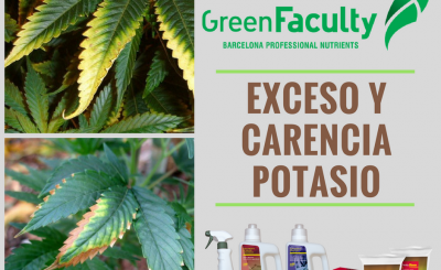 Exceso-carencia-Potasio-marihuana-cannabis-greenfaculty